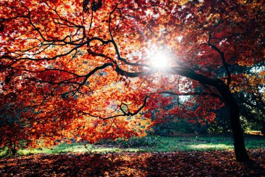 auburn autumn, auburn autumn acorn photos