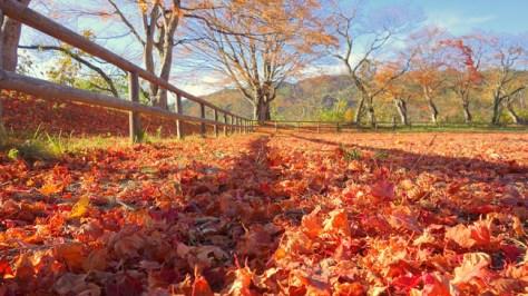 Feuilles-mortes, dead leaves, autumn colors
