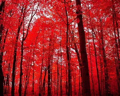 crimson trees