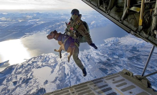 Military dogs trained to accompany soldiers on 'High Altitude High Opening' (HAHO) parachute jumps. Source Foreign Policy