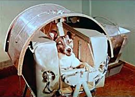 Laika in training for Sputnik 2 mission. Source NASA