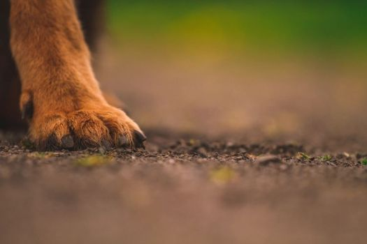 a dog's paw-print on our hearts