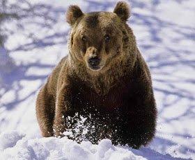 Bear Day, Sretebia tradition, Romanian folklore myths legends