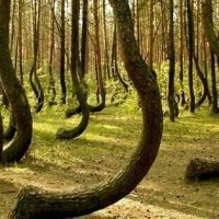 Incredible Myths and Folklore from Romanian Woods