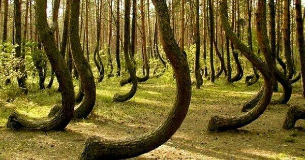 Hoia Baciu Forest, Cluj, Romania. Folklore