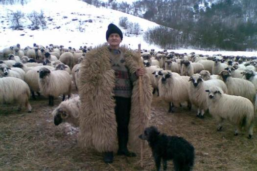 Animals in Romanian Folklore and Mythology, sacred sheepfold