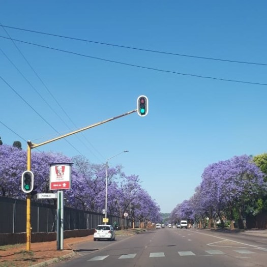 The Fragrant Jacaranda Trees of Pretoria