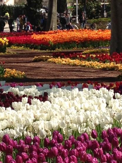 Gulhane Park tulips