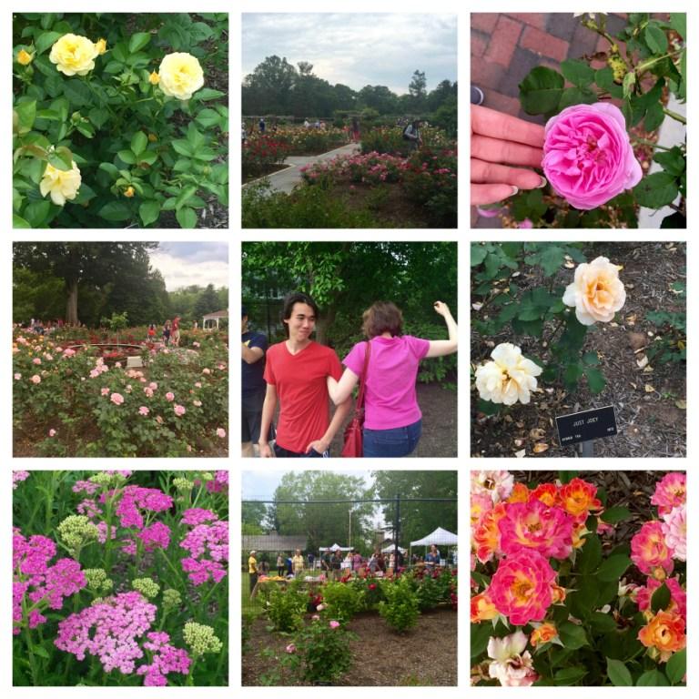 colonel-park-rose-garden