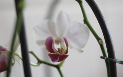 Orquídies: colors i formes diferents per a tots els gustos
