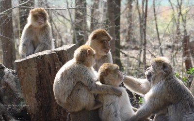 Are you thinking about a PhD? The experience of primatologist Mireia Olivé