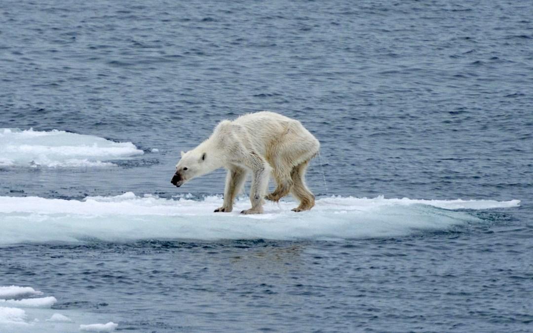 L'Àrtic: a qui li importa?