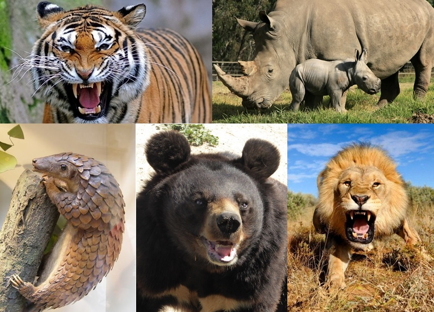The 5 most threatened species by traditional Chinese medicine