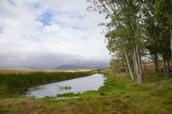 Pond on game reserve