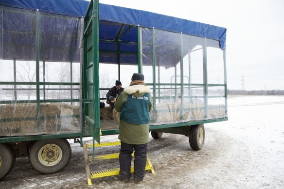 Covered hay wagon
