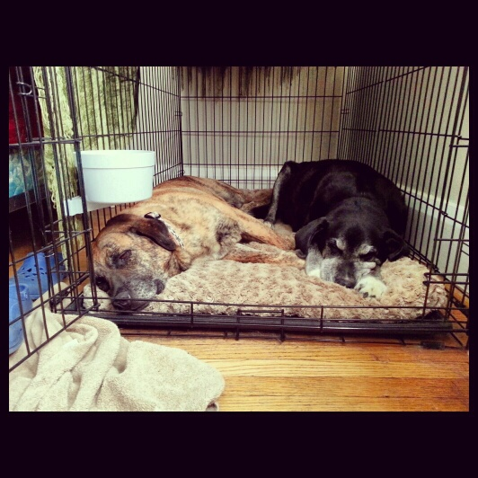Gracie and Ebony sharing a crate