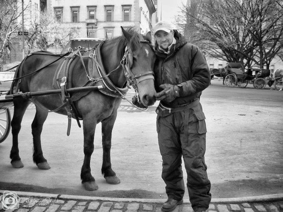 Carriage driver with horse near Central Park