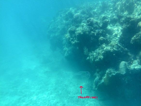 Jellyfish beside coral reef, Jibacoa