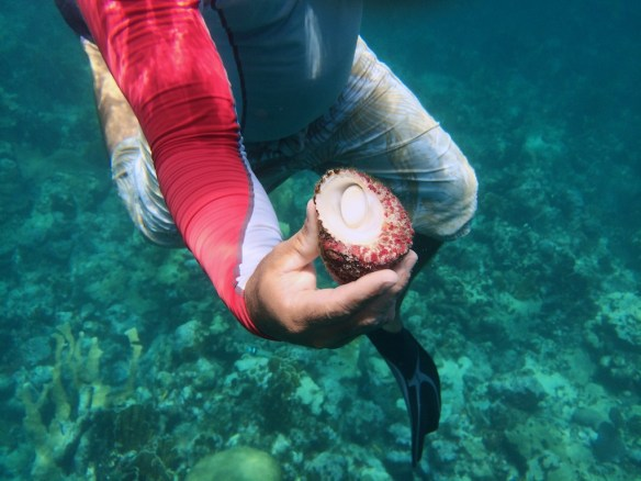 Pedro holding mollusk underwater