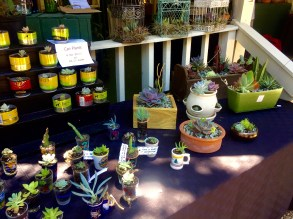 Cute Succulent stand at Wimberley Market Days