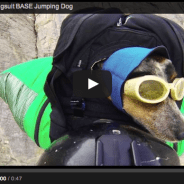 How Can Dogs Really Fly?