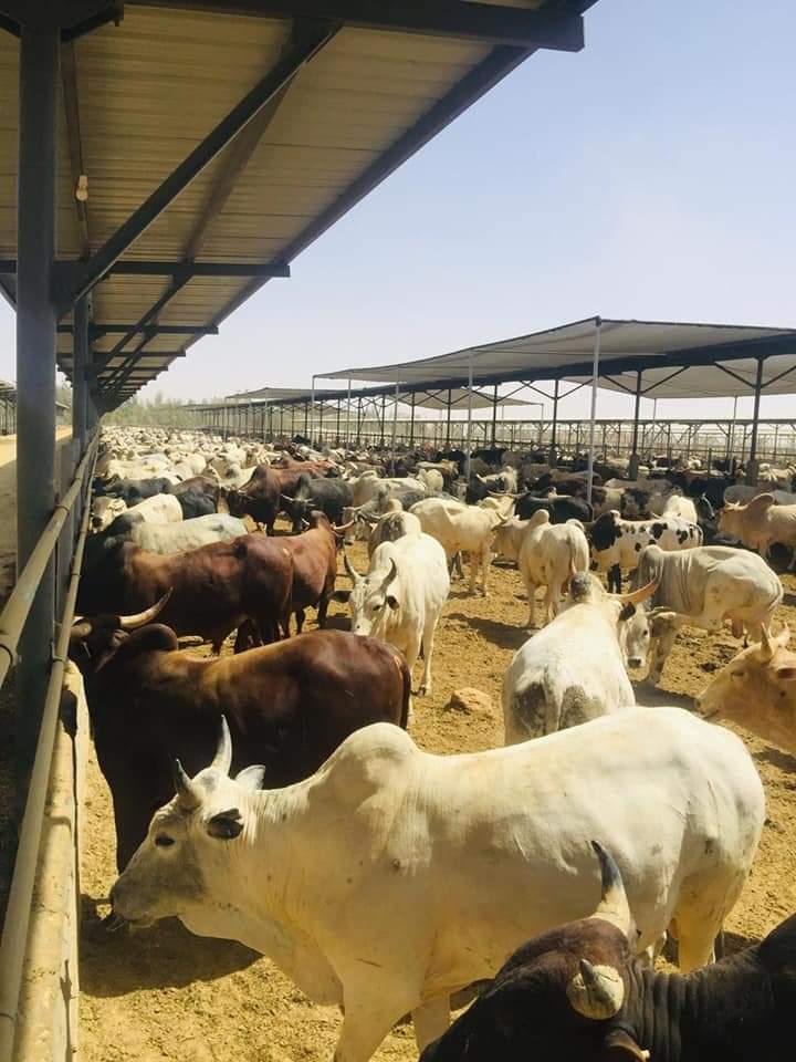 صور نشرها أيضا وزير قطاع الأعمال عن مزرعة توشكي