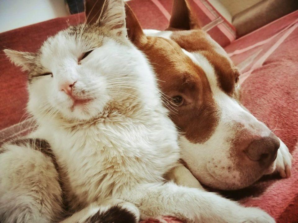 Consejos para que gatos y perros vivan juntos