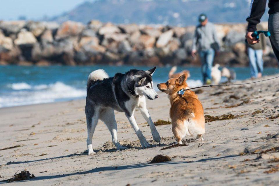 Existen algunas playas de España que aceptan perros