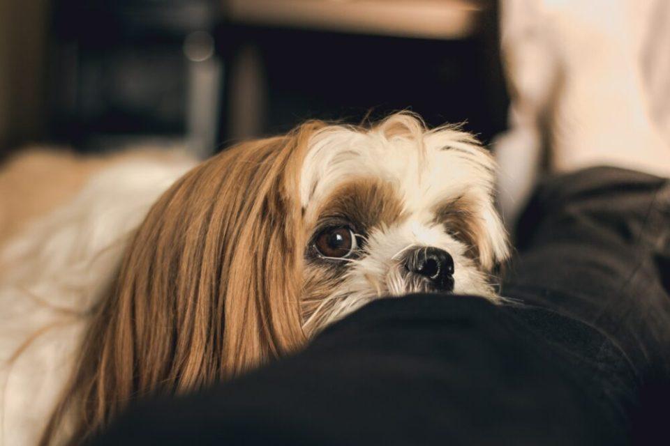 Como enseñar a un cachorro