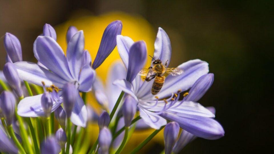 El baile de las abejas, una curiosidad sobre las abejas que pocos conocen