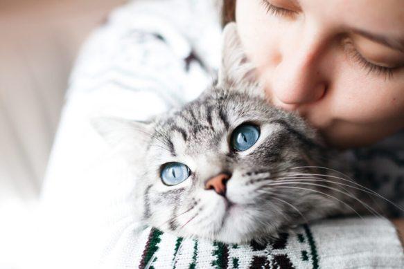 Educar a los gatos es posible