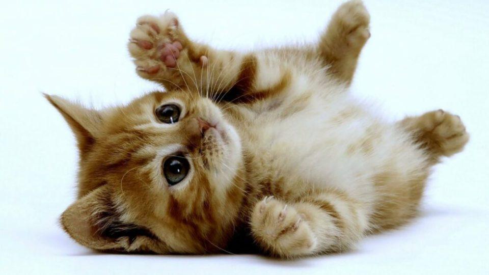 El refuerzo positivo, elemento clave para educar a un gato
