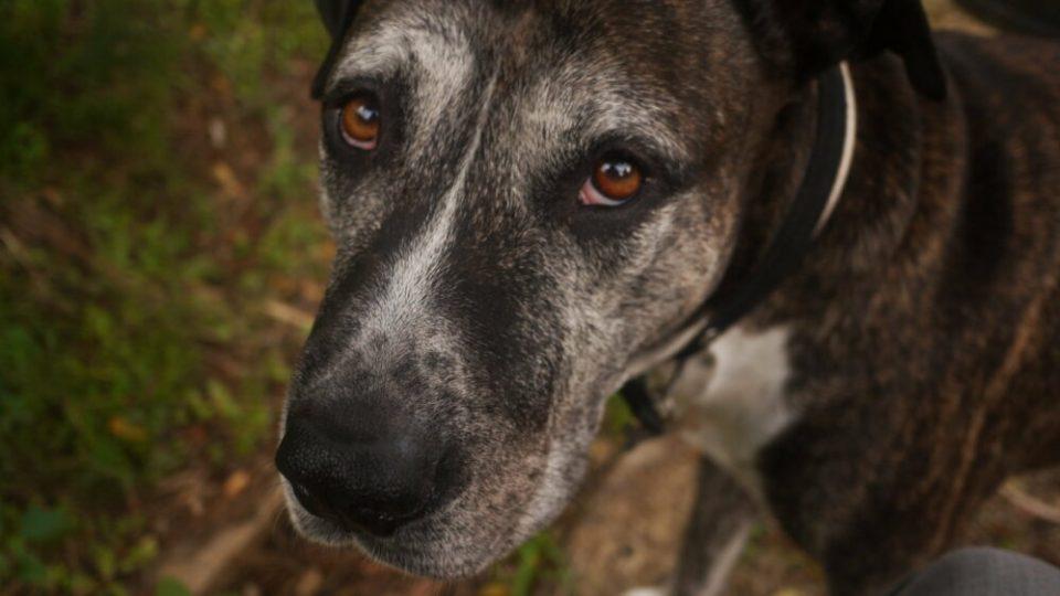 como tratar y socializar un perro maltratado
