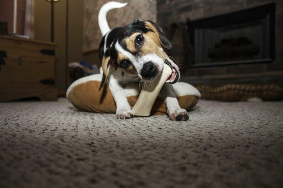 ¿Muerde el zapato? Cada vez que le riñes le rompes el corazón a tu perro