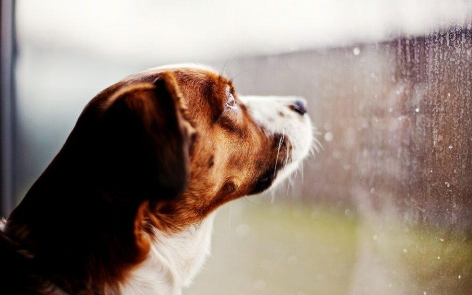 qué hacer si un perro no quiere pasear bajo la lluvia