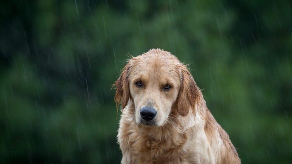 Consejos para pasear a los perros bajo la lluvia