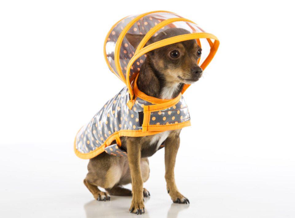 chubasquero, un complemento estético para perros muy funcional