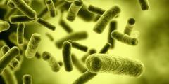 بحث عن البكتيريا