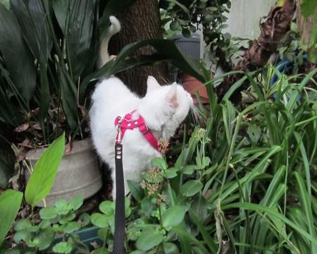 Arnes para Gatos regulable