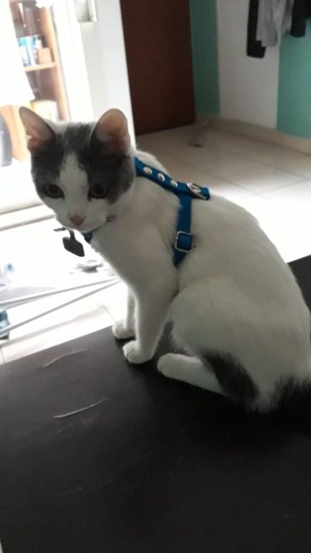 Arnes pretal para gatos seguro