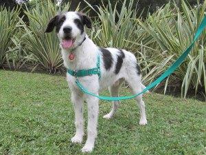 Arnes Sensible Arnes para perros Antitironess y antiescape