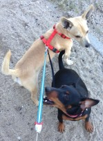 Sami and Lou on the beach