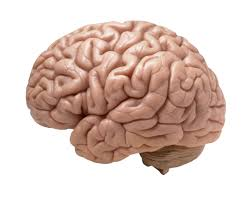 Photo of كيف يؤثر الدماغ على عملية خسارة الوزن واتباع نظام غذائي سليم!