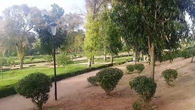 Photo of المساحات الخضراء تحمي الصحة النفسية والجسدية للإنسان
