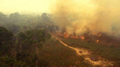 Photo of نشطاء يتهمون الرئيس البرازيلي بإحراق غابة الأمازون