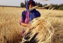 Photo of كوثر الخديجي:فعل الحصاد والنجاعة الرمزية