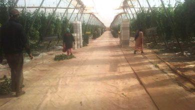Photo of ربورتاج.. الواقع الخفي للعاملات بالضيعات الفلاحية بإقليم شتوكة أيت بها