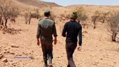 """Photo of دواوير بإقليم تارودانت تطلق صرخات لحمايتها من الهجوم المتكرر لـ""""عصابات الرعاة الرحل"""""""