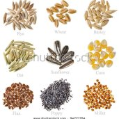 stock-photo-collection-cereal-grains-and-seeds-rye-wheat-barley-oat-sunflower-corn-flax-poppy-millet-94221784