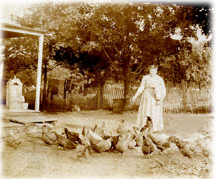 Mrs Cook and her chickens